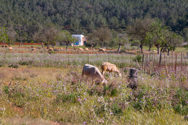 http://www.canplanells.com/wp-content/uploads/IMG_4062_finca_can_pere_musson.jpg